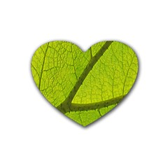 Green Leaf Plant Nature Structure Rubber Coaster (heart)