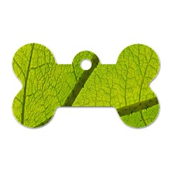 Green Leaf Plant Nature Structure Dog Tag Bone (two Sides)