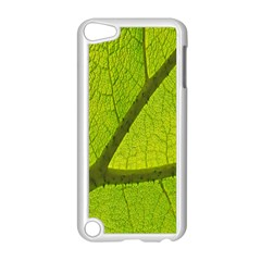 Green Leaf Plant Nature Structure Apple Ipod Touch 5 Case (white)