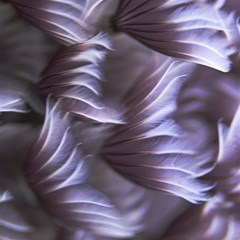 Sea Worm Under Water Abstract Magic Photo Cubes