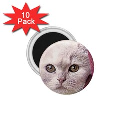 Cat Pet Cute Art Abstract Vintage 1 75  Magnets (10 Pack)