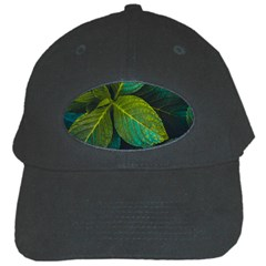 Green Plant Leaf Foliage Nature Black Cap
