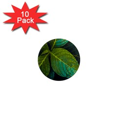 Green Plant Leaf Foliage Nature 1  Mini Magnet (10 Pack)  by Nexatart