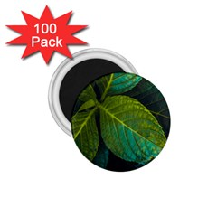 Green Plant Leaf Foliage Nature 1 75  Magnets (100 Pack)