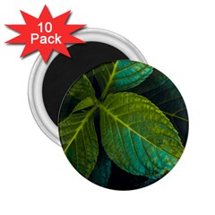 Green Plant Leaf Foliage Nature 2 25  Magnets (10 Pack)