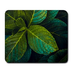 Green Plant Leaf Foliage Nature Large Mousepads