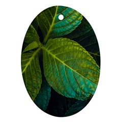 Green Plant Leaf Foliage Nature Oval Ornament (two Sides) by Nexatart