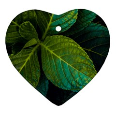 Green Plant Leaf Foliage Nature Heart Ornament (two Sides)