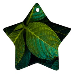 Green Plant Leaf Foliage Nature Star Ornament (two Sides)