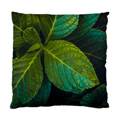 Green Plant Leaf Foliage Nature Standard Cushion Case (two Sides)