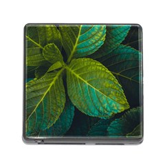 Green Plant Leaf Foliage Nature Memory Card Reader (square) by Nexatart