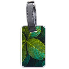 Green Plant Leaf Foliage Nature Luggage Tags (one Side)  by Nexatart
