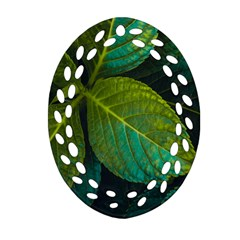 Green Plant Leaf Foliage Nature Ornament (oval Filigree) by Nexatart