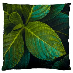 Green Plant Leaf Foliage Nature Large Cushion Case (two Sides) by Nexatart