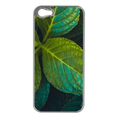 Green Plant Leaf Foliage Nature Apple Iphone 5 Case (silver) by Nexatart