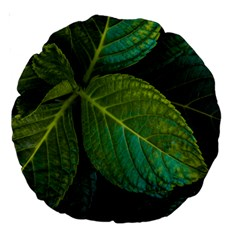 Green Plant Leaf Foliage Nature Large 18  Premium Round Cushions