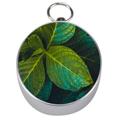 Green Plant Leaf Foliage Nature Silver Compasses