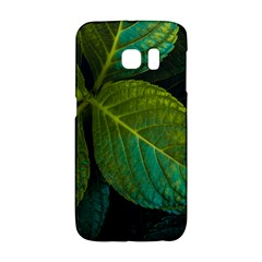 Green Plant Leaf Foliage Nature Galaxy S6 Edge by Nexatart