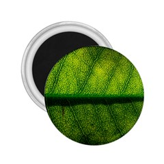 Leaf Nature Green The Leaves 2 25  Magnets