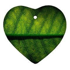 Leaf Nature Green The Leaves Ornament (heart)