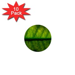 Leaf Nature Green The Leaves 1  Mini Buttons (10 Pack)
