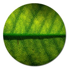 Leaf Nature Green The Leaves Magnet 5  (round)