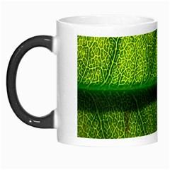 Leaf Nature Green The Leaves Morph Mugs by Nexatart