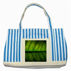 Leaf Nature Green The Leaves Striped Blue Tote Bag