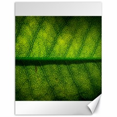 Leaf Nature Green The Leaves Canvas 18  X 24