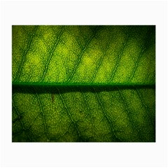 Leaf Nature Green The Leaves Small Glasses Cloth (2 Side)
