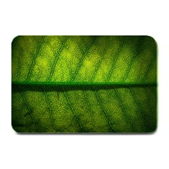 Leaf Nature Green The Leaves Plate Mats
