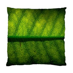 Leaf Nature Green The Leaves Standard Cushion Case (two Sides) by Nexatart