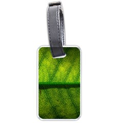 Leaf Nature Green The Leaves Luggage Tags (one Side)  by Nexatart