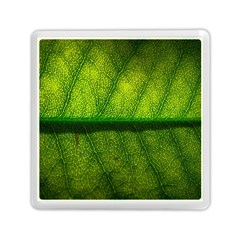 Leaf Nature Green The Leaves Memory Card Reader (square)  by Nexatart