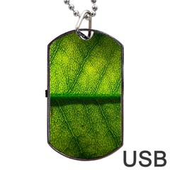 Leaf Nature Green The Leaves Dog Tag Usb Flash (one Side)