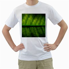 Leaf Nature Green The Leaves Men s T Shirt (white)
