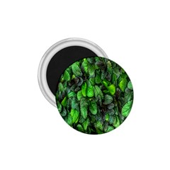 The Leaves Plants Hwalyeob Nature 1 75  Magnets