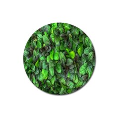 The Leaves Plants Hwalyeob Nature Magnet 3  (round)