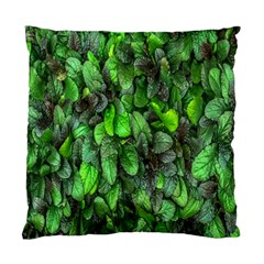 The Leaves Plants Hwalyeob Nature Standard Cushion Case (one Side)
