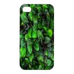 The Leaves Plants Hwalyeob Nature Apple Iphone 4/4s Hardshell Case