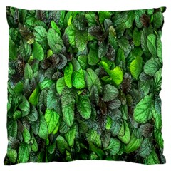 The Leaves Plants Hwalyeob Nature Large Cushion Case (two Sides)