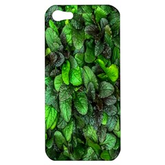 The Leaves Plants Hwalyeob Nature Apple Iphone 5 Hardshell Case