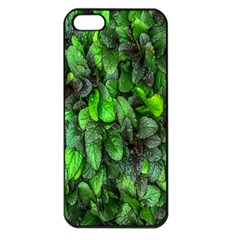 The Leaves Plants Hwalyeob Nature Apple Iphone 5 Seamless Case (black) by Nexatart