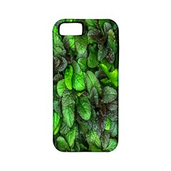 The Leaves Plants Hwalyeob Nature Apple Iphone 5 Classic Hardshell Case (pc+silicone)