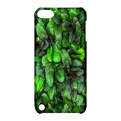 The Leaves Plants Hwalyeob Nature Apple Ipod Touch 5 Hardshell Case With Stand by Nexatart