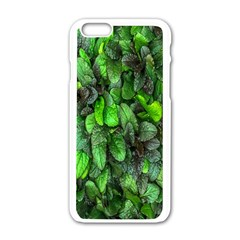 The Leaves Plants Hwalyeob Nature Apple Iphone 6/6s White Enamel Case