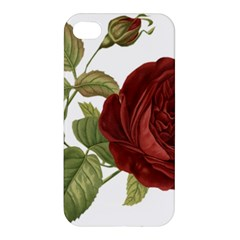 Rose 1077964 1280 Apple Iphone 4/4s Hardshell Case by vintage2030