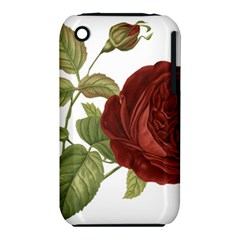 Rose 1077964 1280 Iphone 3s/3gs by vintage2030