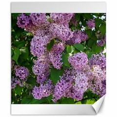 Lilacs 2 Canvas 8  X 10  by dawnsiegler