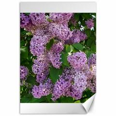 Lilacs 2 Canvas 12  X 18   by dawnsiegler